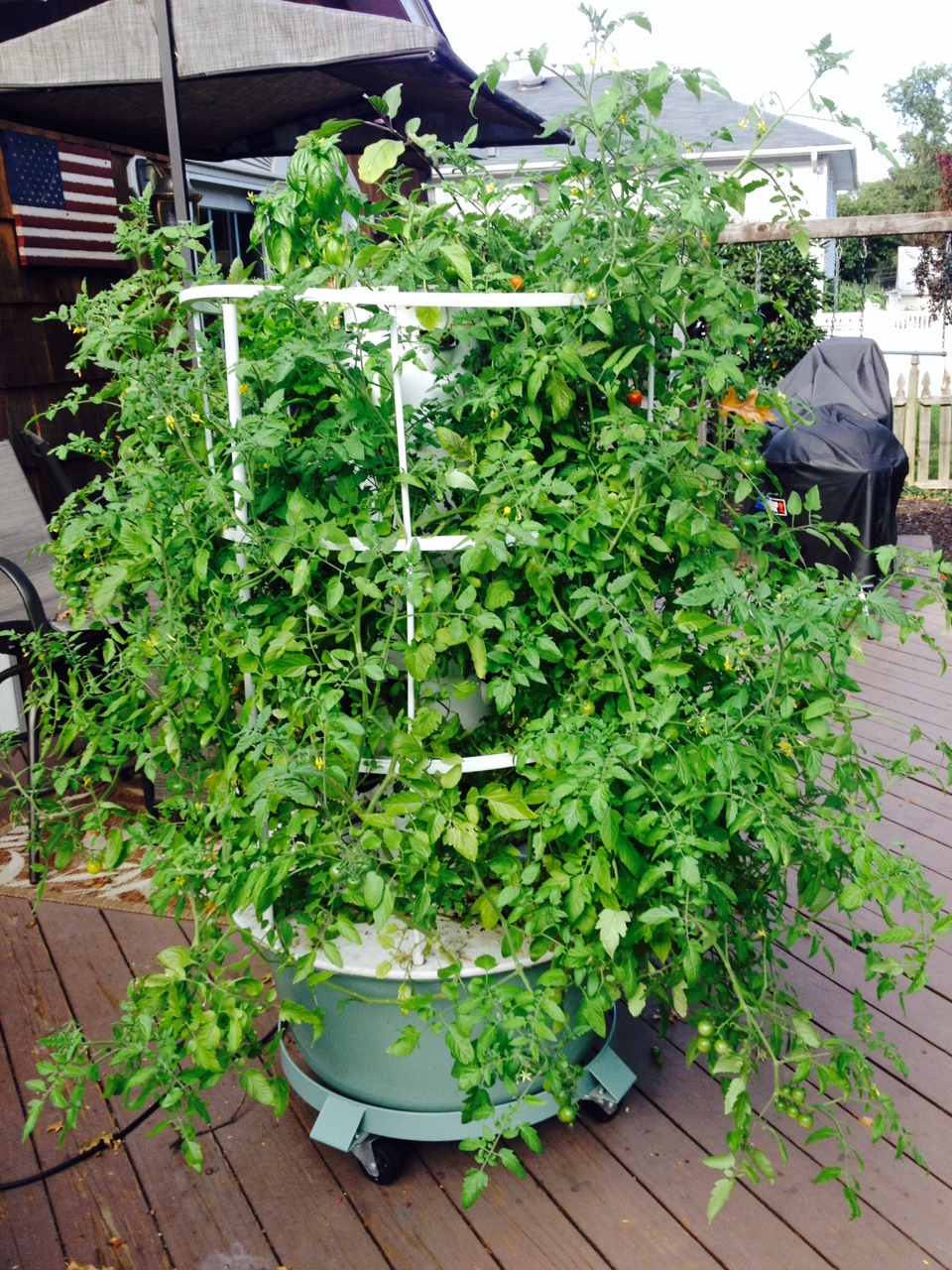 Laura Rokosz Monmouth University Aeroponic Gardening
