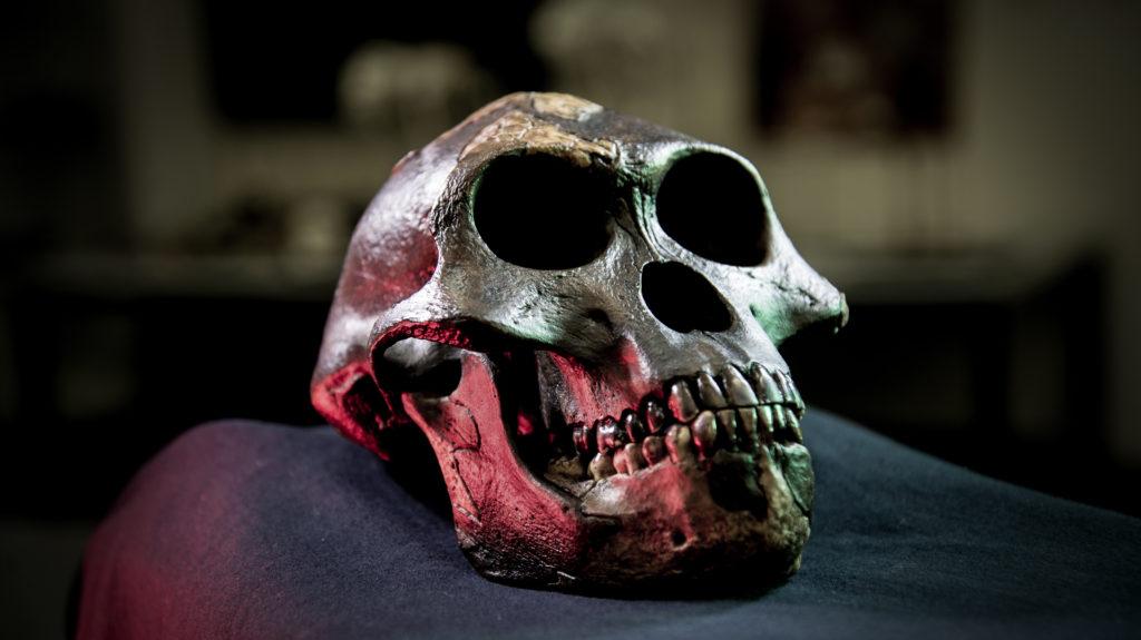 homininnatureaustralopith01